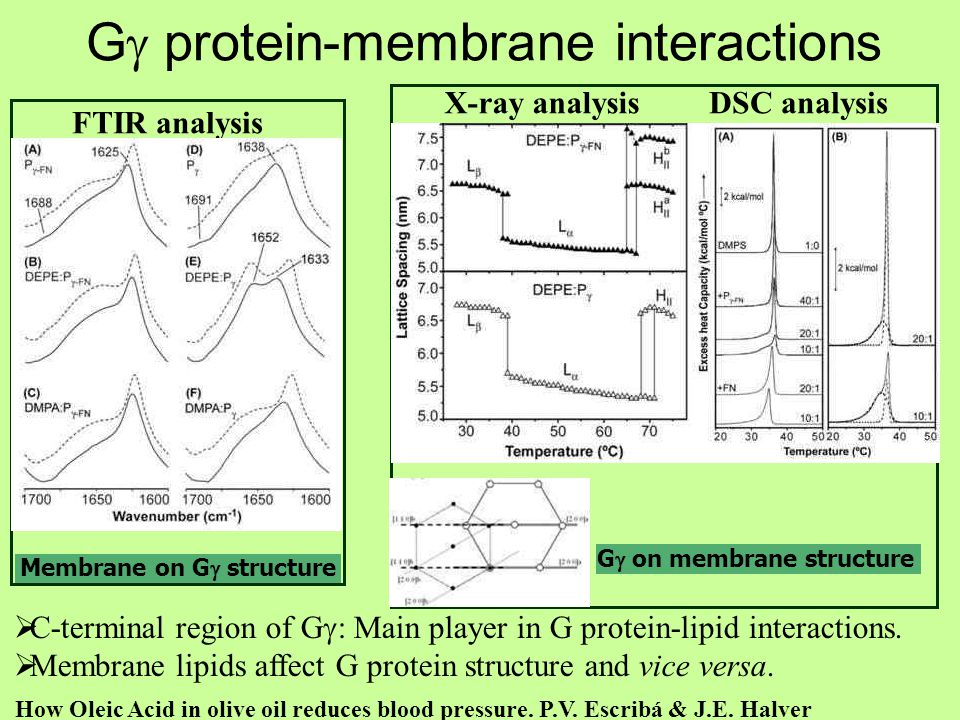 Gg protein-membrane interactions