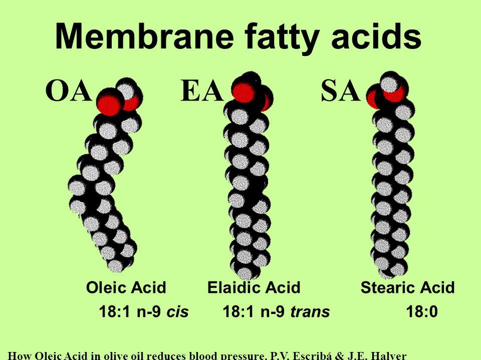 Oleic Acid Elaidic Acid Stearic Acid 18:1 n-9 cis 18:1 n-9 trans 18:0