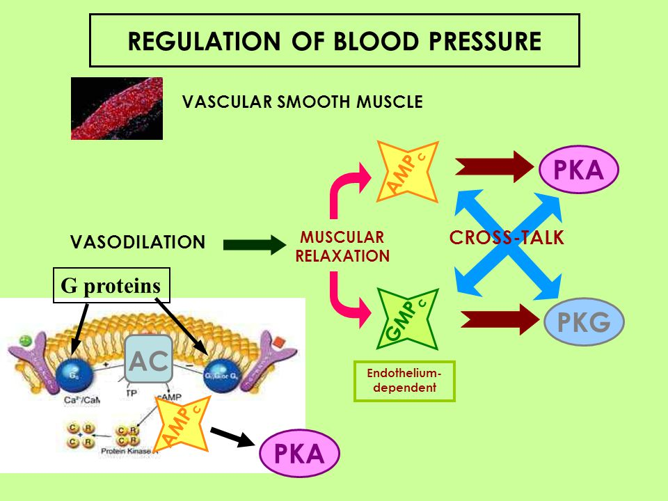 PKA PKG AC PKA REGULATION OF BLOOD PRESSURE G proteins AMPc CROSS-TALK