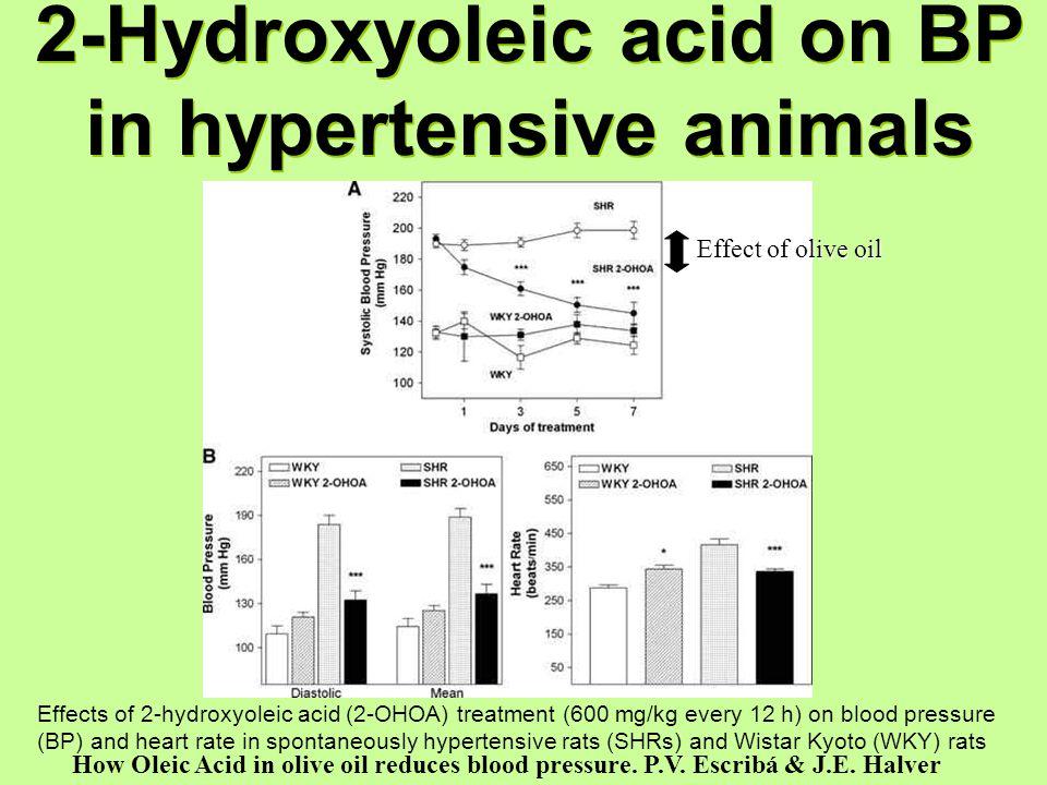 2-Hydroxyoleic acid on BP in hypertensive animals