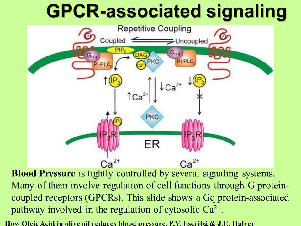 GPCR-associated signaling GPCR-associated signaling