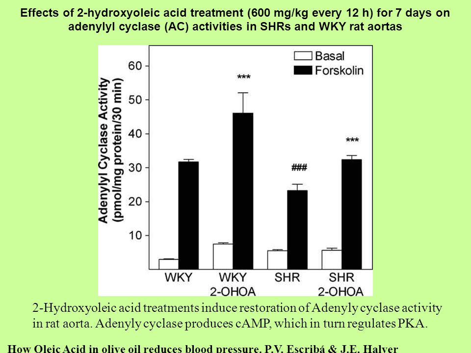 Effects of 2-hydroxyoleic acid treatment (600 mg/kg every 12 h) for 7 days on adenylyl cyclase (AC) activities in SHRs and WKY rat aortas