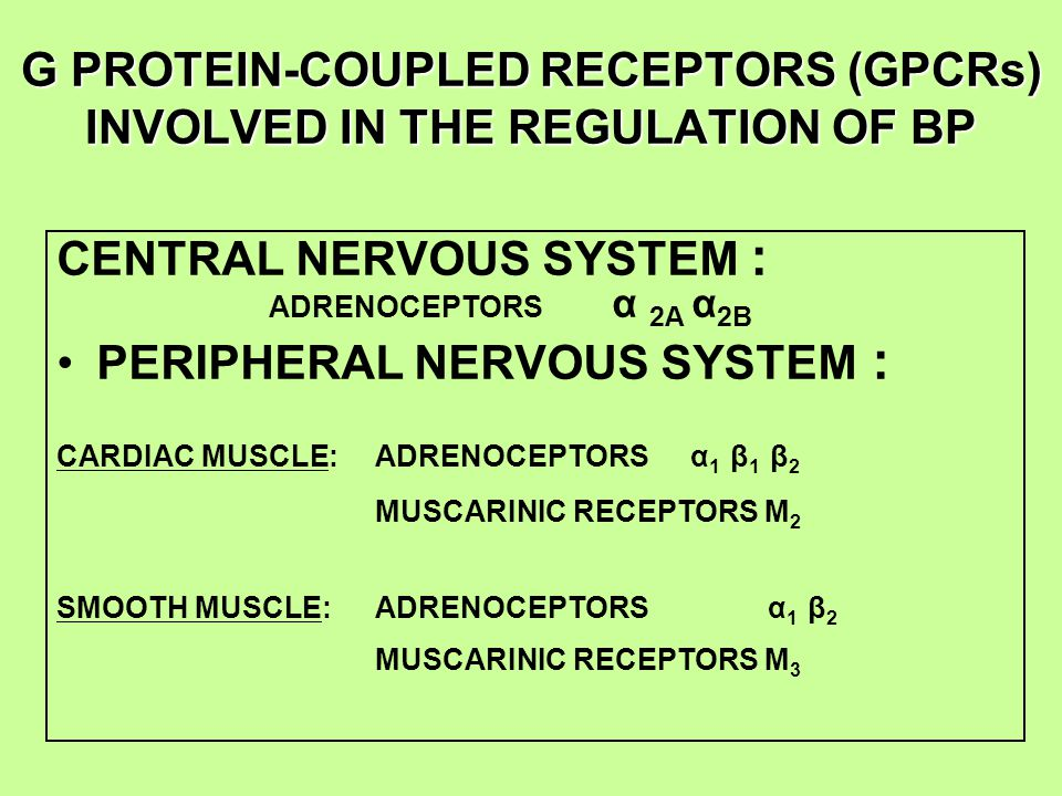G PROTEIN-COUPLED RECEPTORS (GPCRs) INVOLVED IN THE REGULATION OF BP