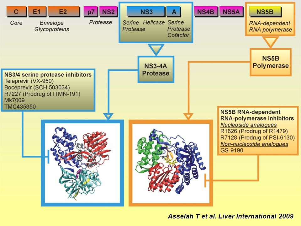 Asselah T et al. Liver International 2009