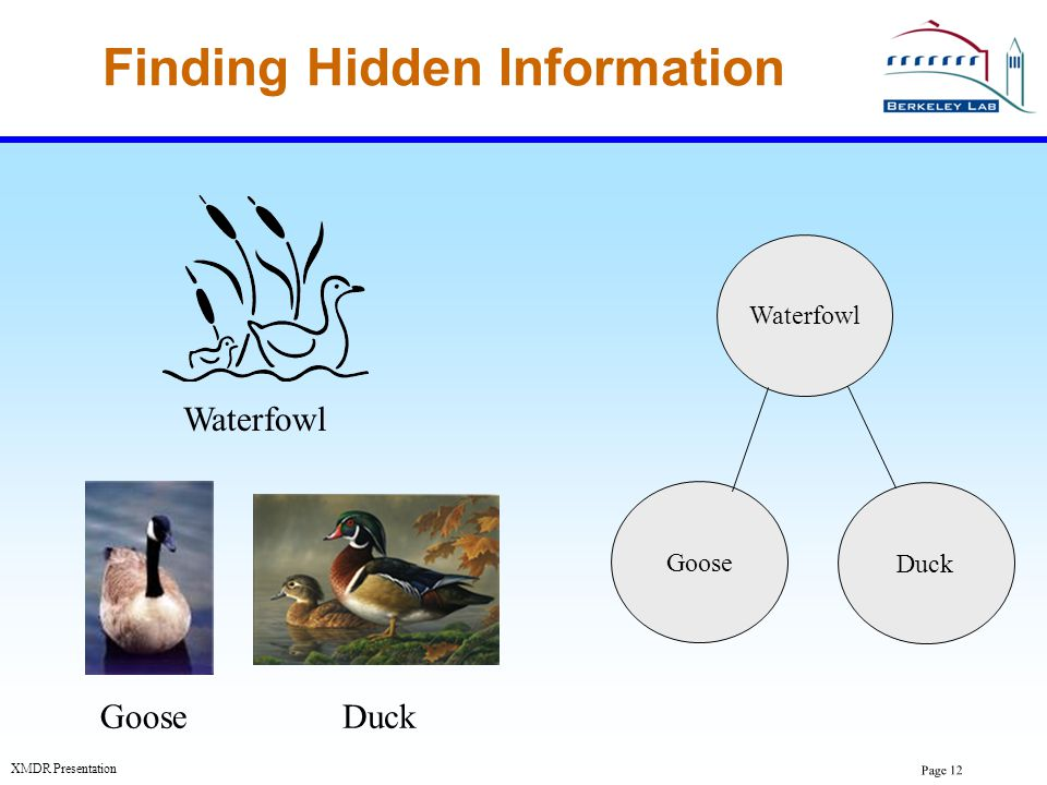 Finding Hidden Information