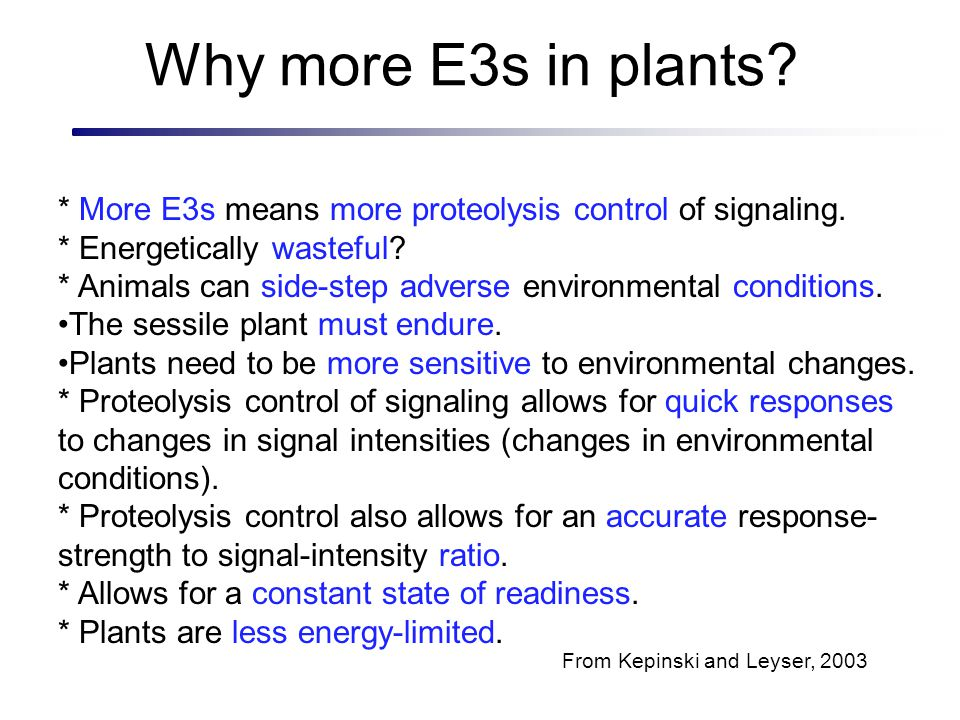 Why more E3s in plants * More E3s means more proteolysis control of signaling. * Energetically wasteful