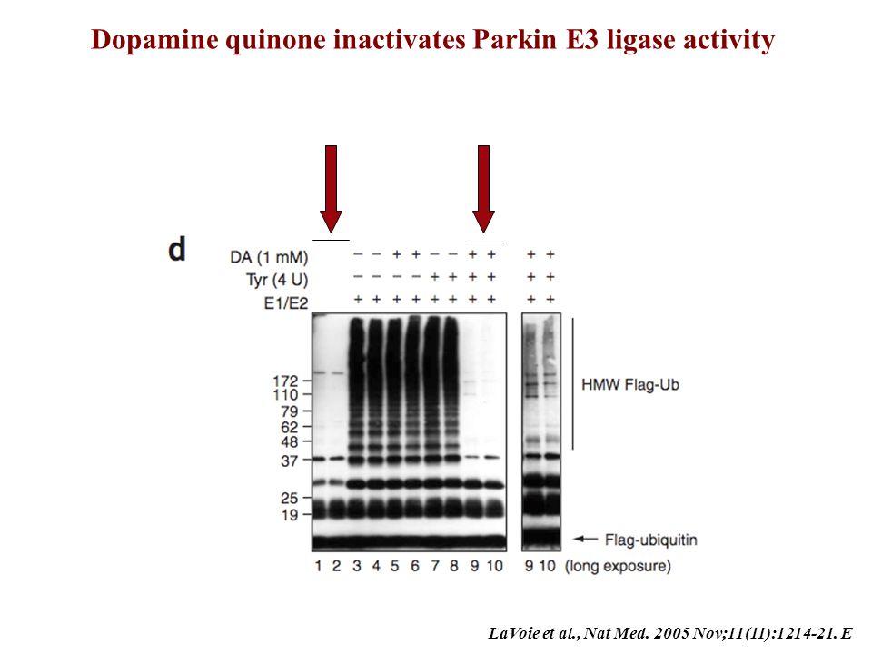 Dopamine quinone inactivates Parkin E3 ligase activity
