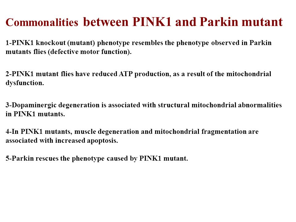 Commonalities between PINK1 and Parkin mutant