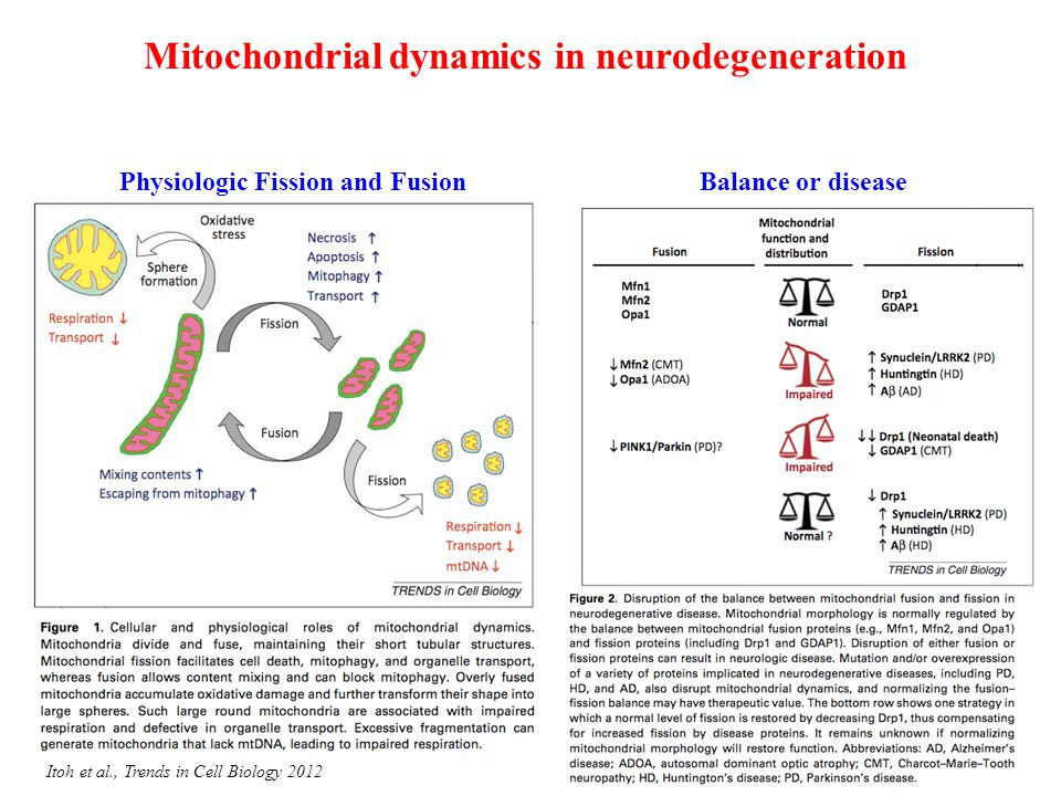 Mitochondrial dynamics in neurodegeneration