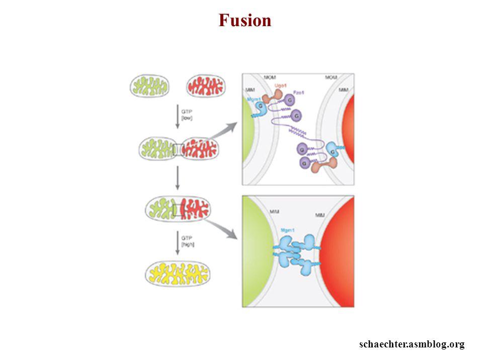 Fusion schaechter.asmblog.org