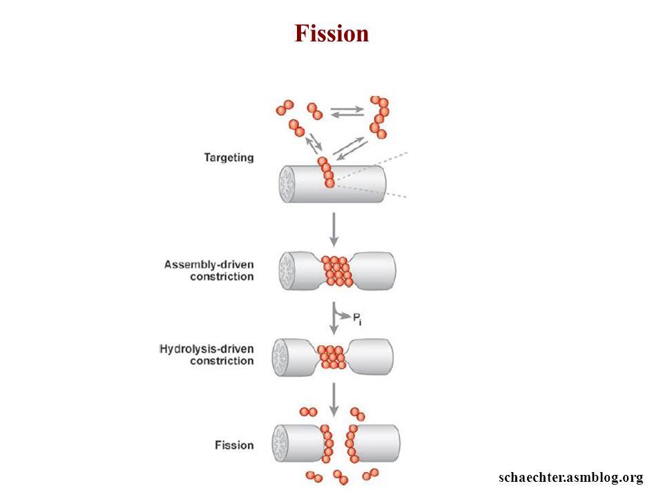 Fission schaechter.asmblog.org