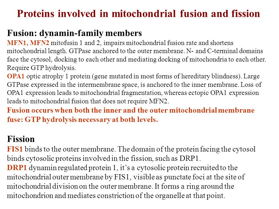 Proteins involved in mitochondrial fusion and fission