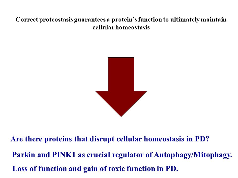 Are there proteins that disrupt cellular homeostasis in PD