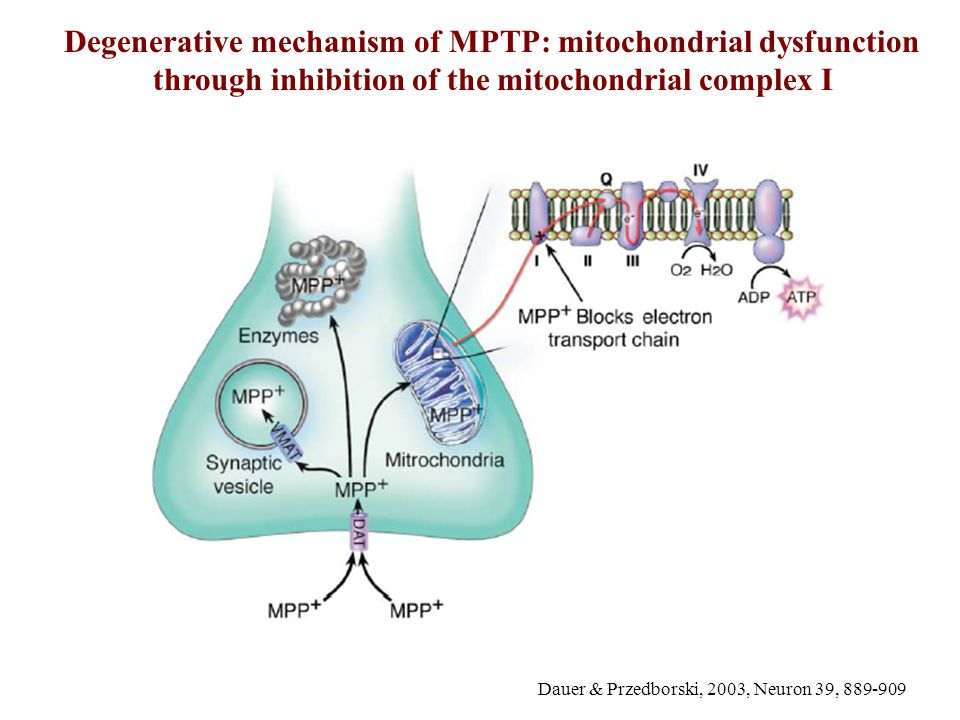 Degenerative mechanism of MPTP: mitochondrial dysfunction through inhibition of the mitochondrial complex I
