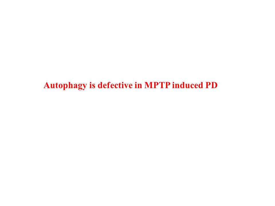 Autophagy is defective in MPTP induced PD