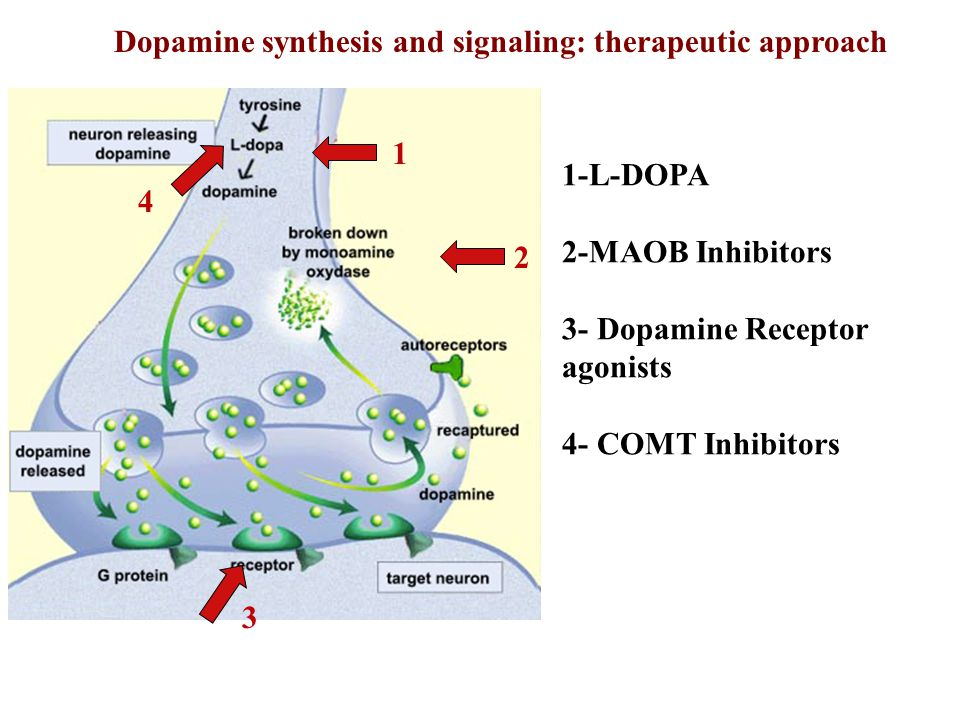 Dopamine synthesis and signaling: therapeutic approach
