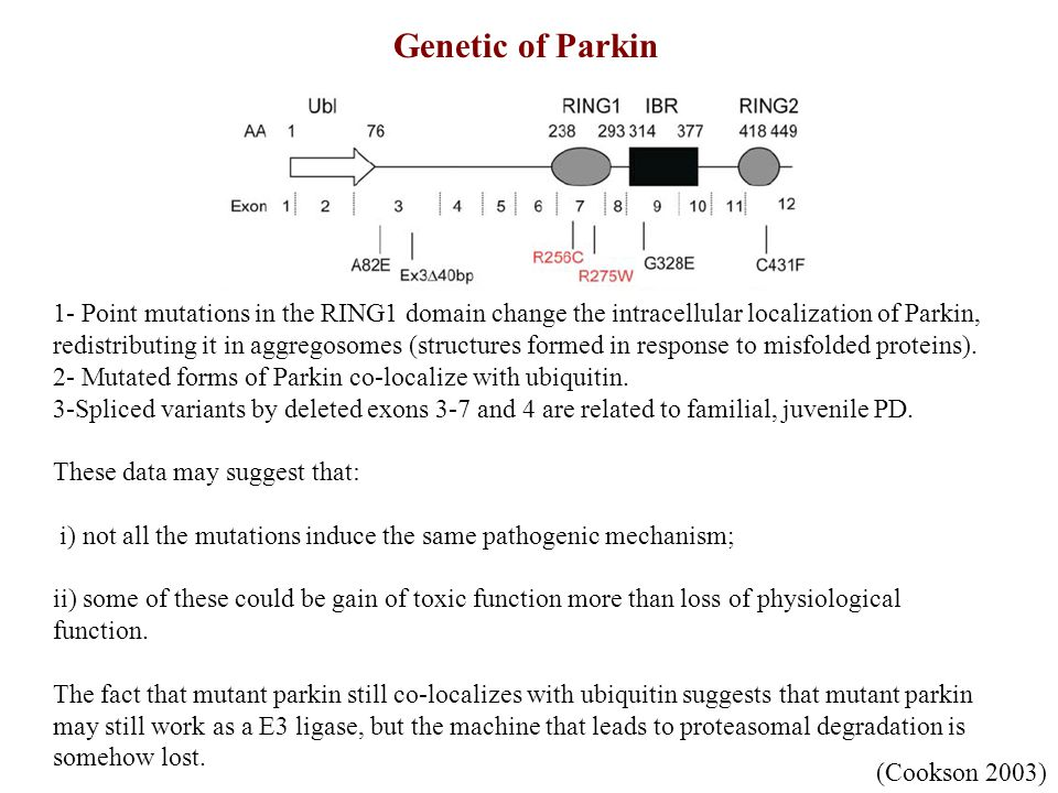 Genetic of Parkin