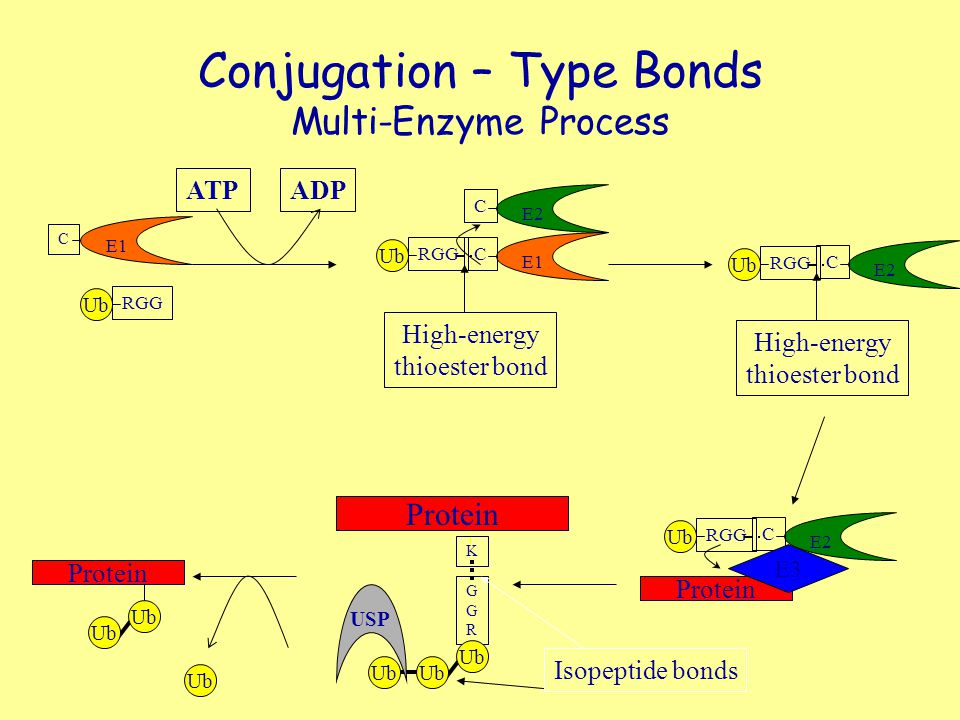 Conjugation – Type Bonds Multi-Enzyme Process