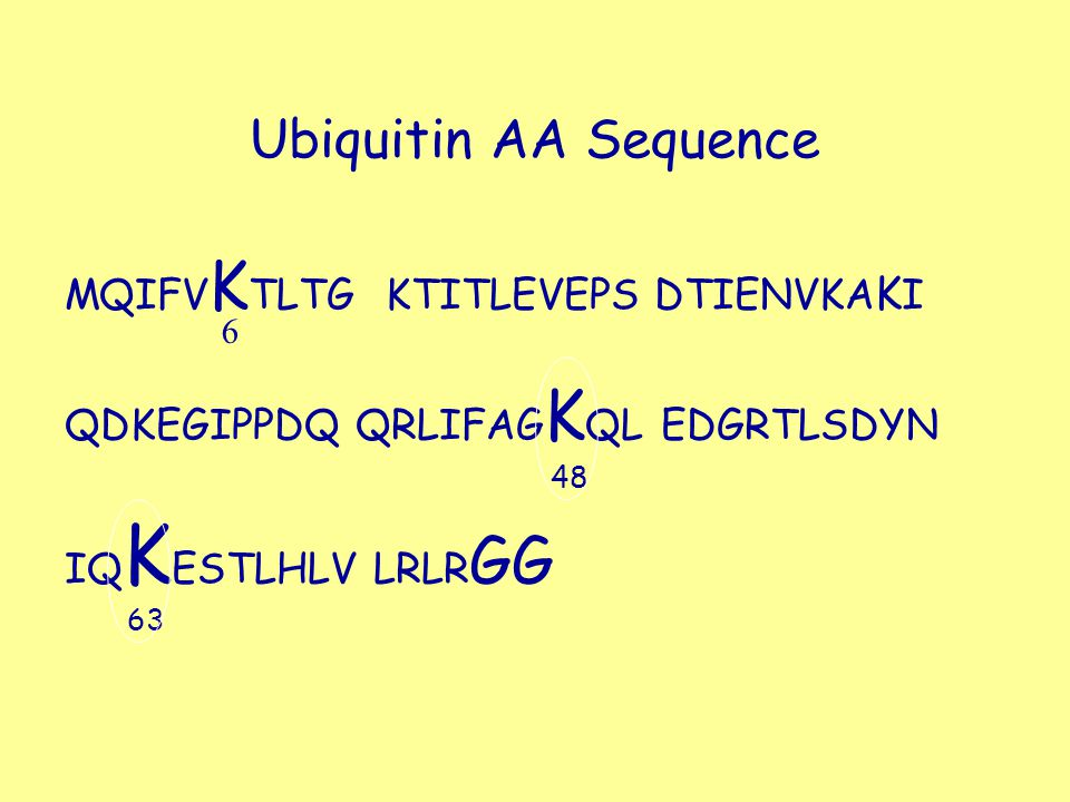 Ubiquitin AA Sequence MQIFVKTLTG KTITLEVEPS DTIENVKAKI