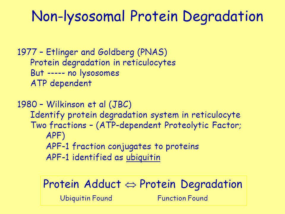 Non-lysosomal Protein Degradation
