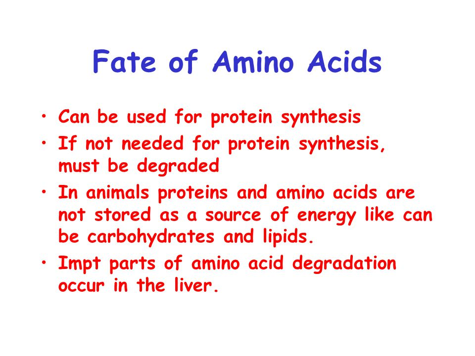Fate of Amino Acids Can be used for protein synthesis