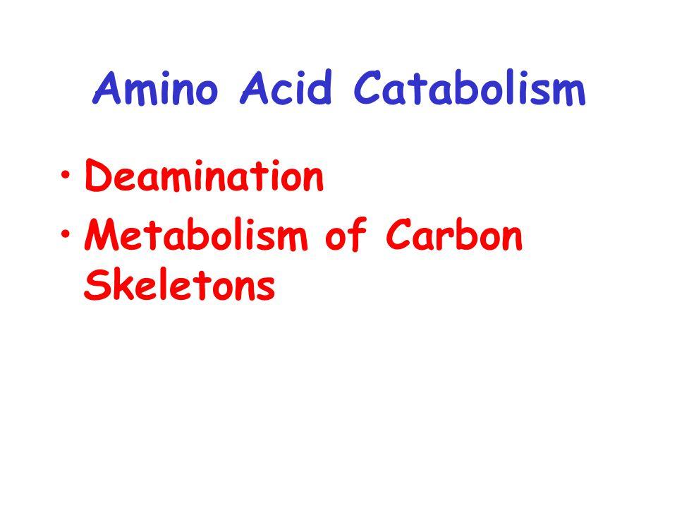 Amino Acid Catabolism Deamination Metabolism of Carbon Skeletons