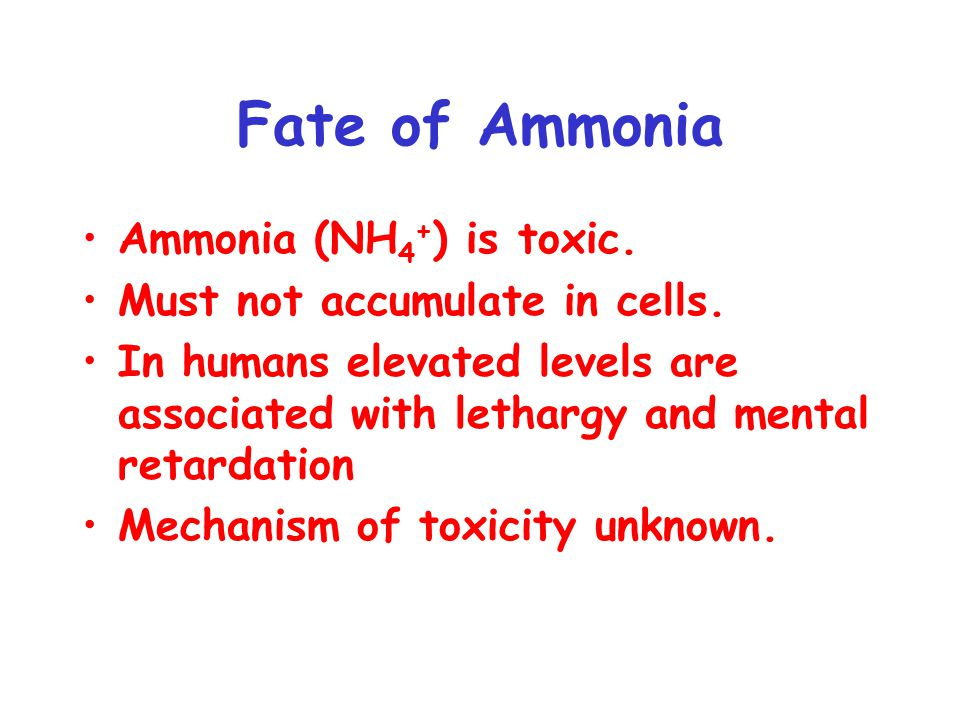 Fate of Ammonia Ammonia (NH4+) is toxic. Must not accumulate in cells.