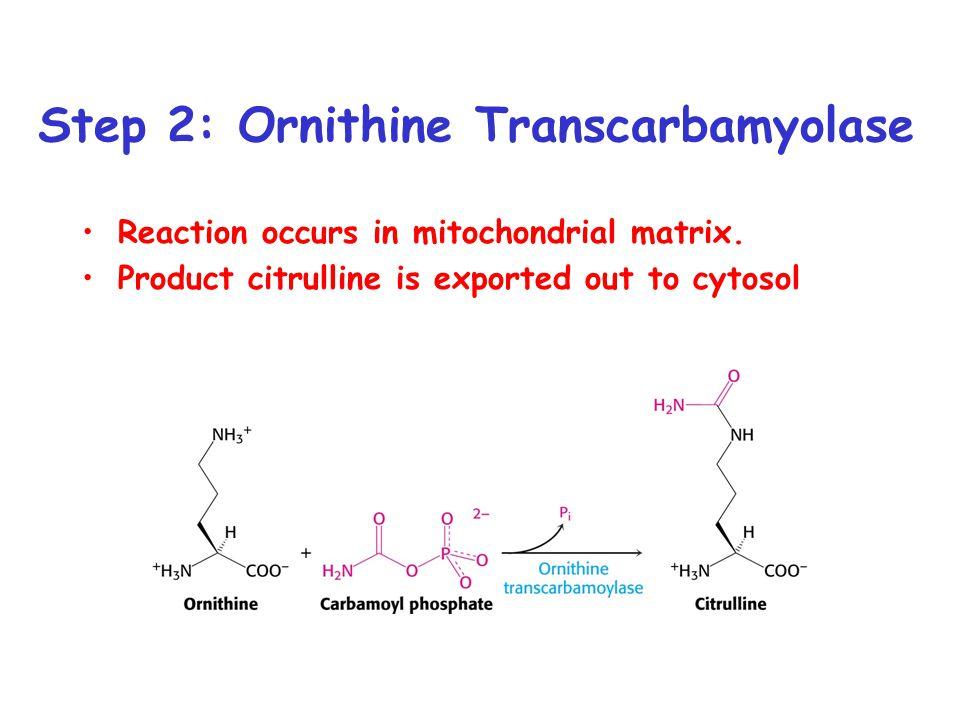 Step 2: Ornithine Transcarbamyolase
