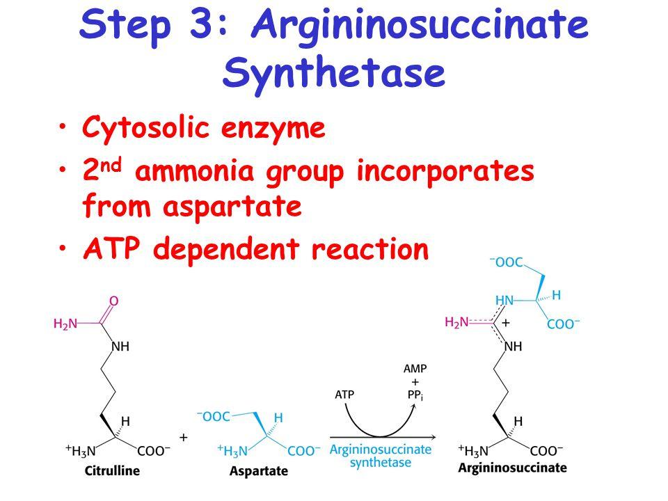 Step 3: Argininosuccinate Synthetase