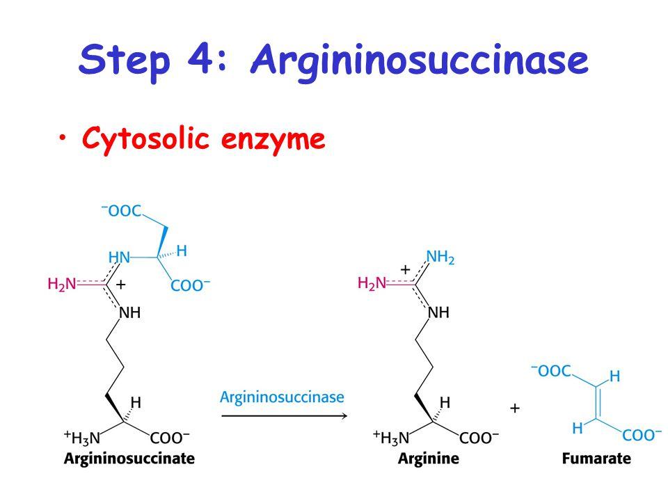 Step 4: Argininosuccinase