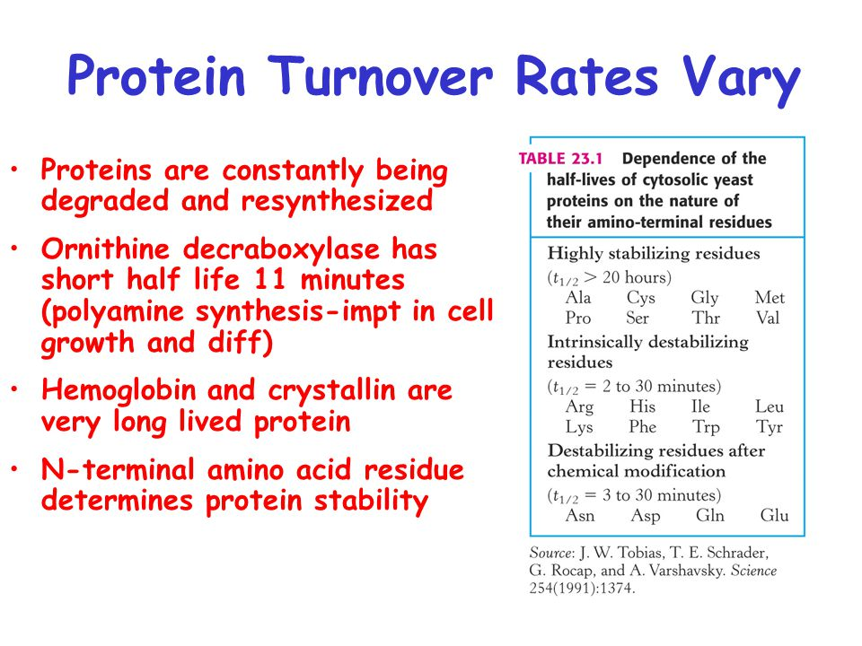 Protein Turnover Rates Vary