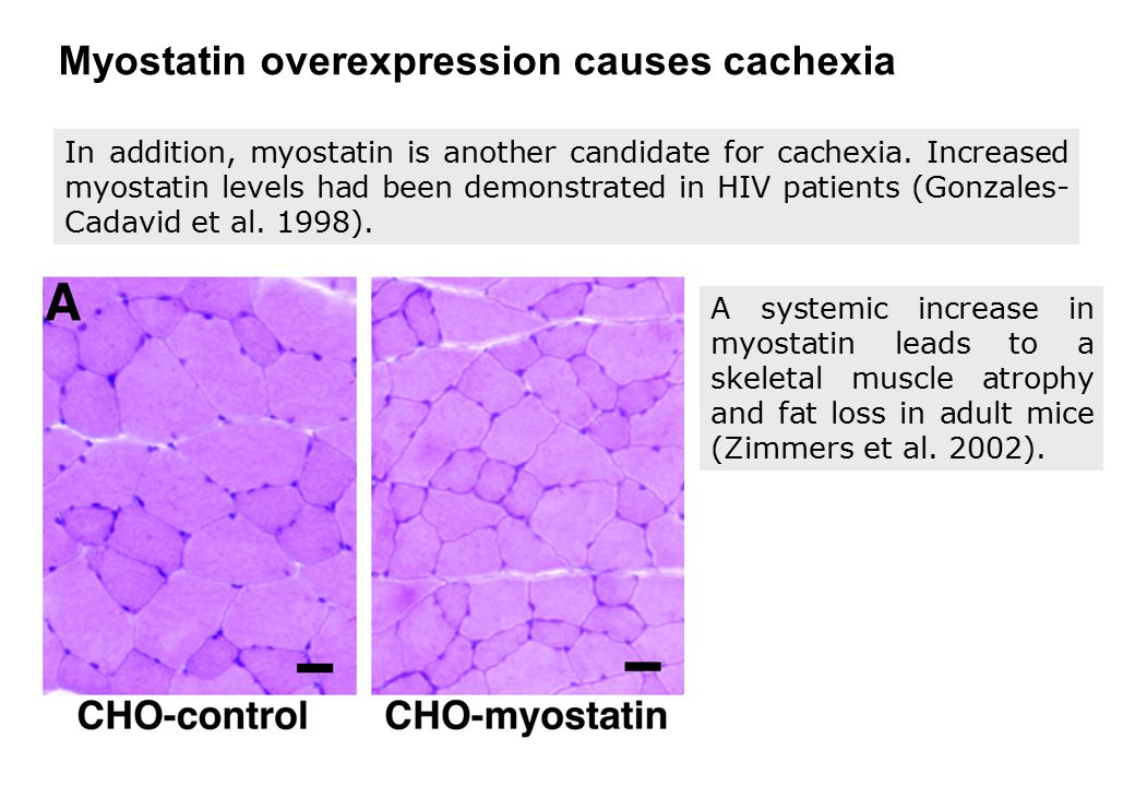Myostatin overexpression causes cachexia