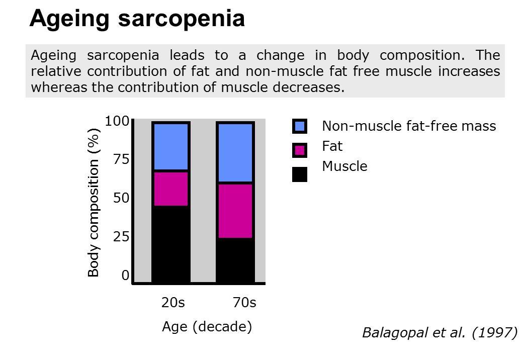 Ageing sarcopenia