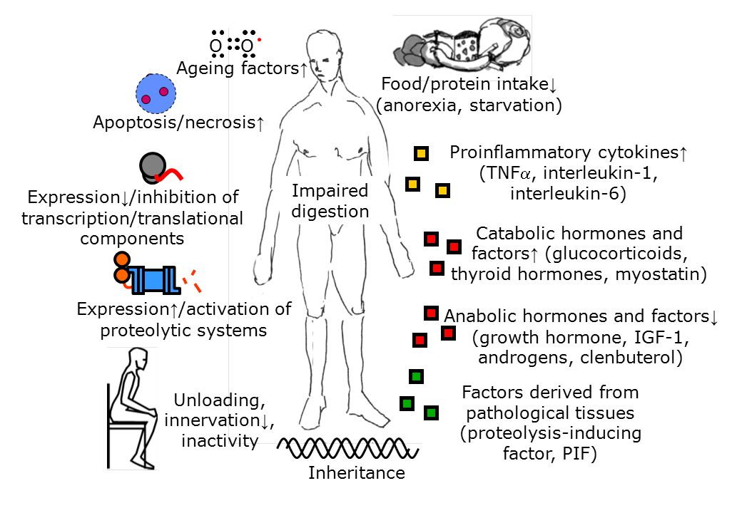 Food/protein intake↓ (anorexia, starvation)