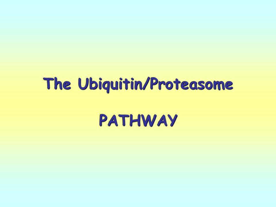 The Ubiquitin/Proteasome