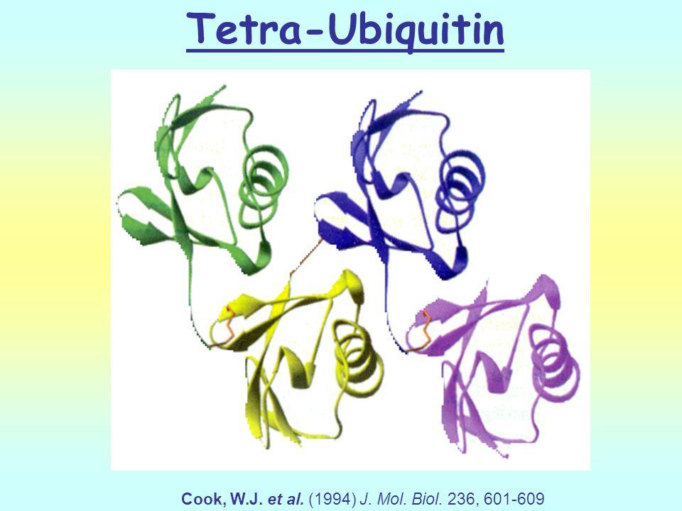 Tetra-Ubiquitin Cook, W.J. et al. (1994) J. Mol. Biol. 236, 601-609