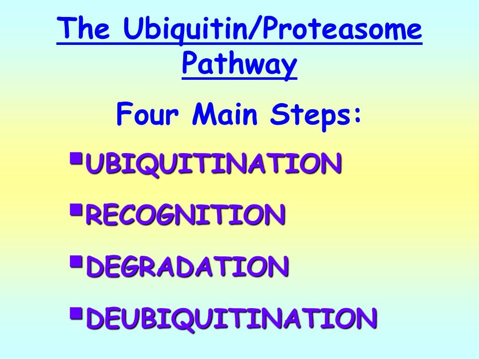 The Ubiquitin/Proteasome Pathway Four Main Steps: