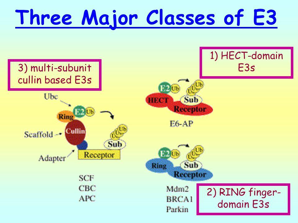 Three Major Classes of E3
