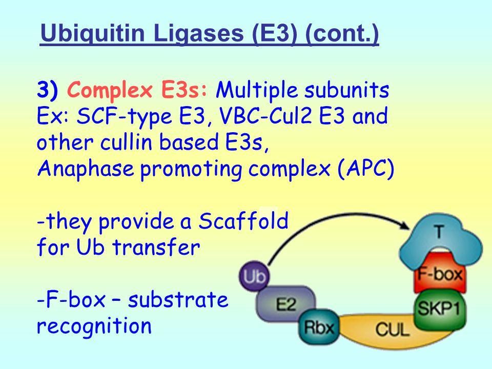 Ubiquitin Ligases (E3) (cont.)