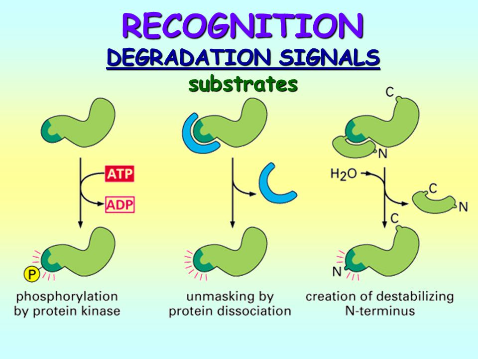 RECOGNITION DEGRADATION SIGNALS substrates