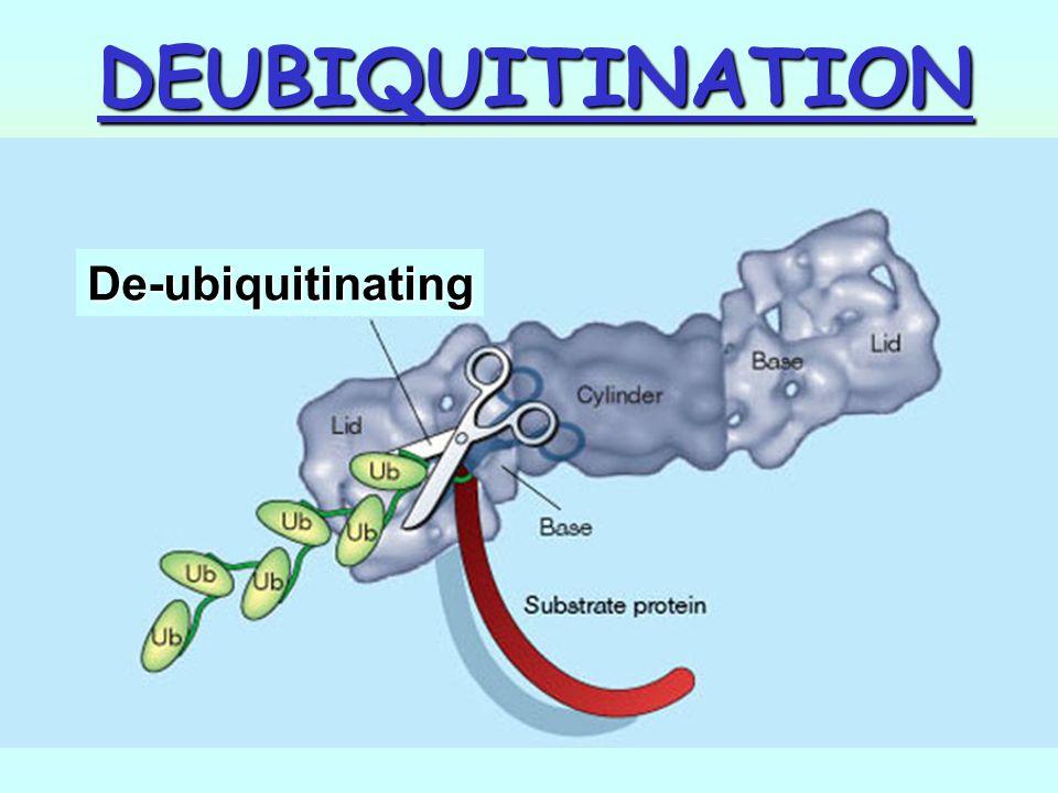 DEUBIQUITINATION De-ubiquitinating