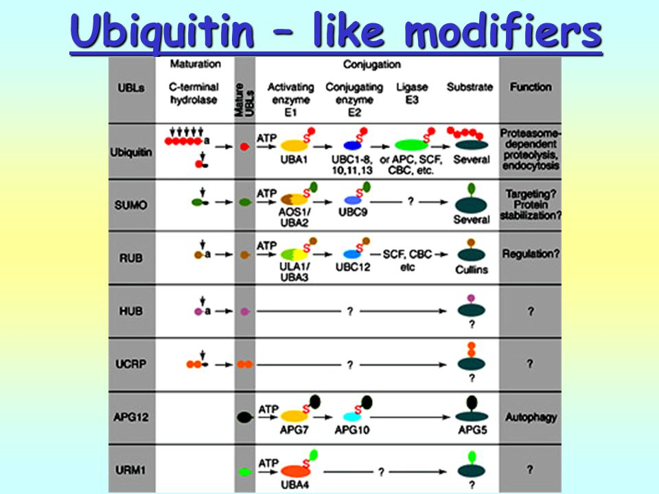 Ubiquitin – like modifiers