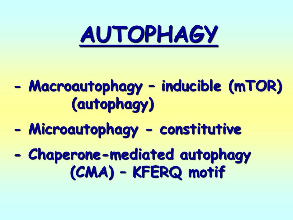 AUTOPHAGY - Macroautophagy – inducible (mTOR) (autophagy)