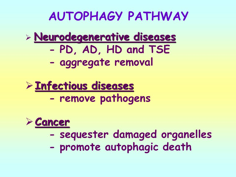 AUTOPHAGY PATHWAY - PD, AD, HD and TSE - aggregate removal