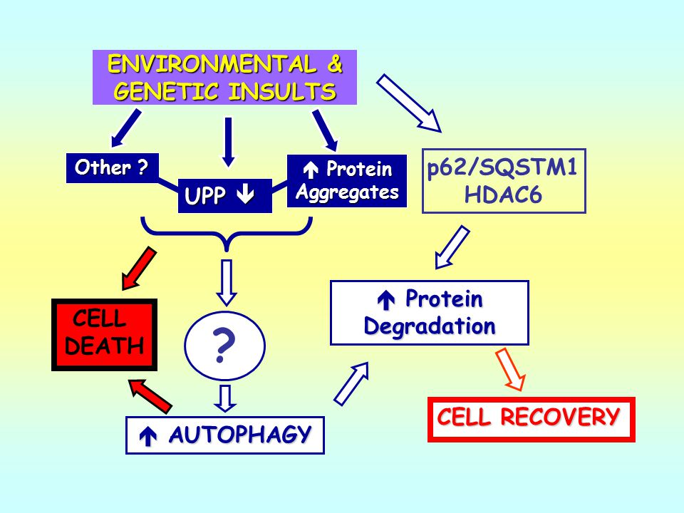 ENVIRONMENTAL & GENETIC INSULTS
