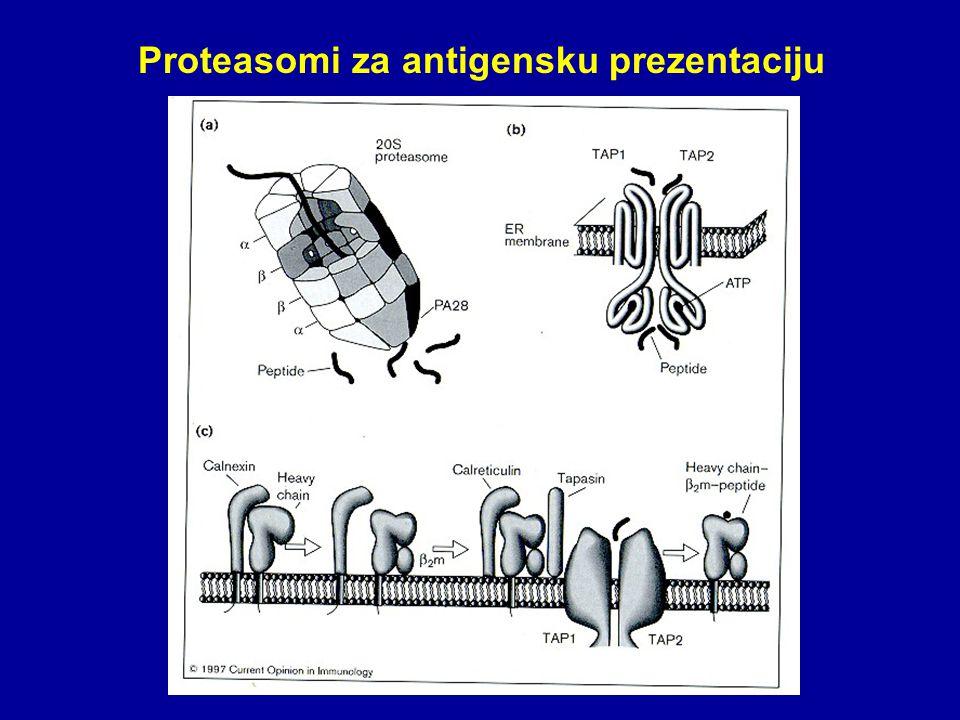 Proteasomi za antigensku prezentaciju