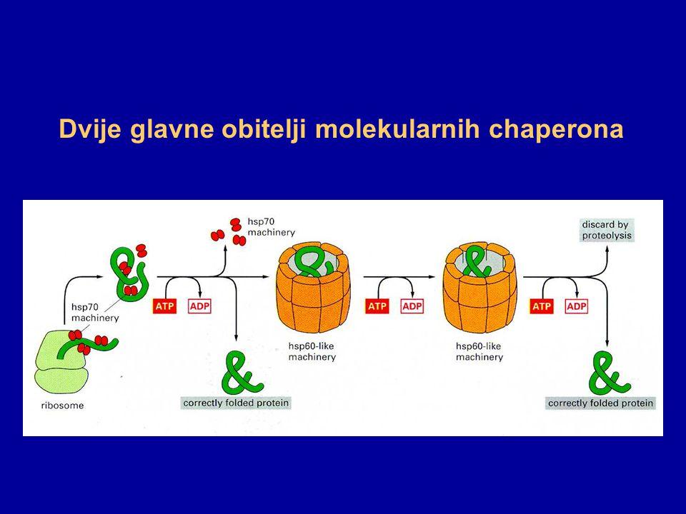 Dvije glavne obitelji molekularnih chaperona