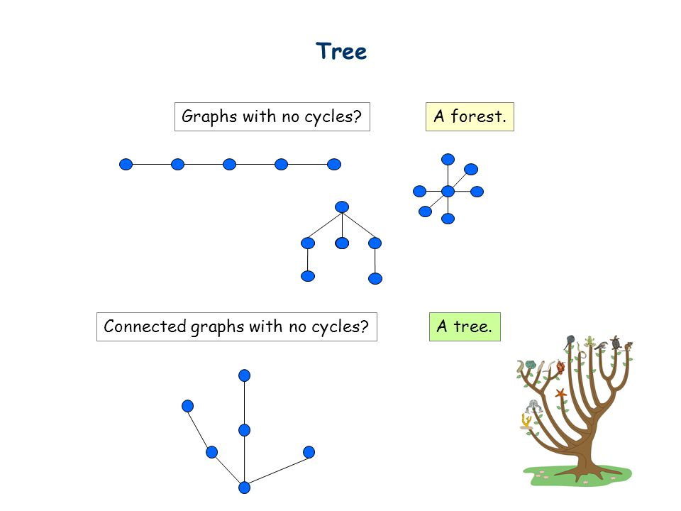 Tree Graphs with no cycles A forest. Connected graphs with no cycles