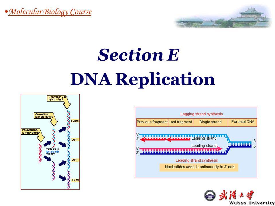 Section E DNA Replication