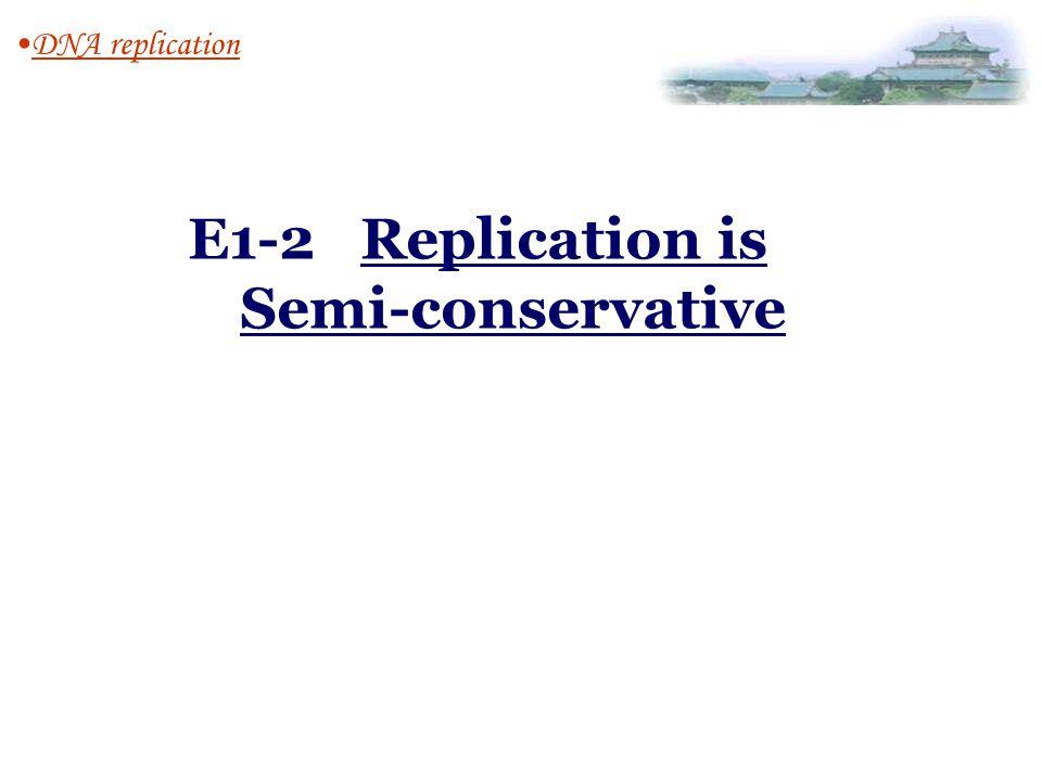 E1-2 Replication is Semi-conservative